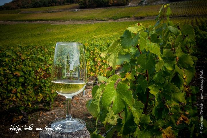 Découverte et dégustation des vins de Savoie au cœur des vignobles de Jongieux © Sébastien TORCHIO