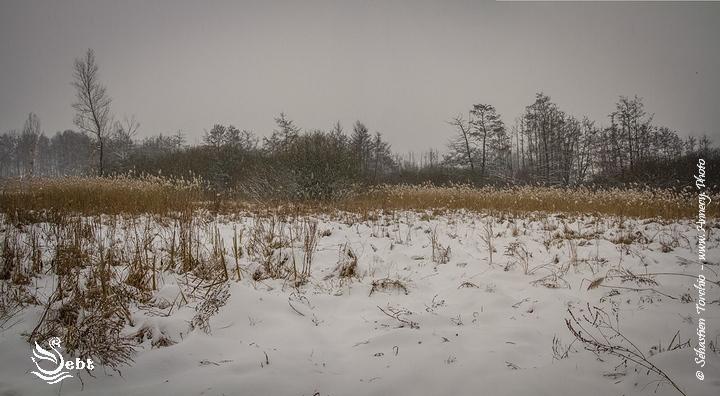Les marais de Poisy en hiver sous la Neige © Sébastien TORCHIO, www.Annecy.Photo