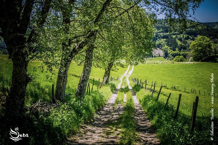 Chemin ombragé au fil du GR4 / GR30 - © Sébastien TORCHIO, www.Annecy.Photo