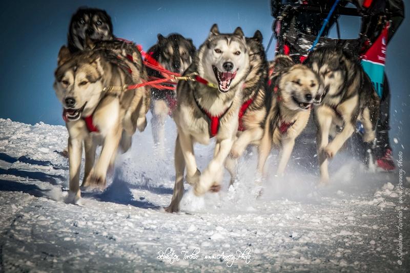 La Grande Odyssée Savoie Mont Blanc, course de chiens de traineaux à travers les Alpes - Sébastien TORCHIO Photographe Sport - www.Annecy.Photo