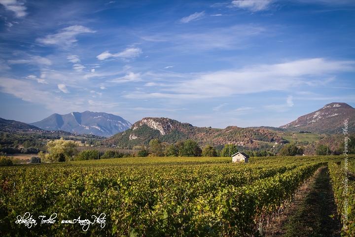 Vignoble de Jongieux dominé par le Mont Colombier en arrière plan © Sébastien TORCHIO, www.Annecy.Photo