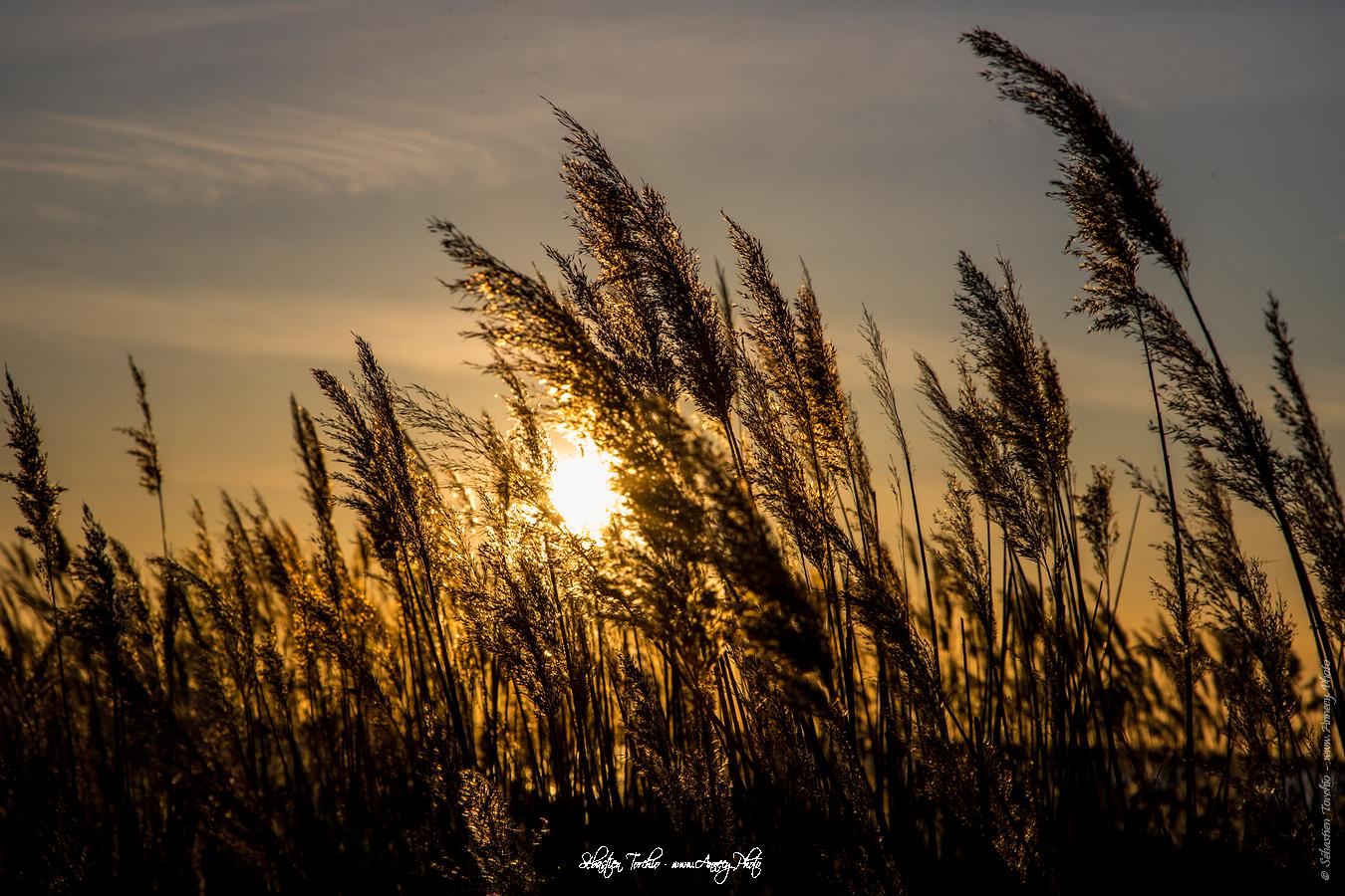 Coucher de soleil sur le Parc Naturel Régional de Camargue - © Sébastien TORCHIO, www.Annecy.Photo